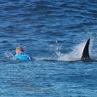 shark attack200